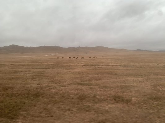 郊外では時折放牧の風景が見られる